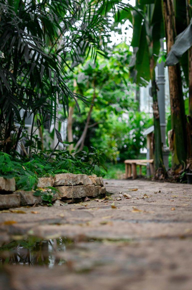 Prawidłowe palikowanie w ogrodzie
